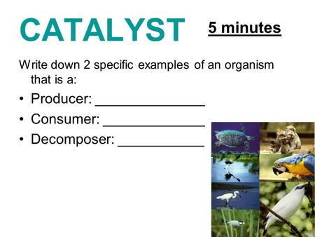 CATALYST Write down 2 specific examples of an organism that is a: Producer: ______________ Consumer: _____________ Decomposer: ___________ 5 minutes.