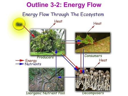 Outline 3-2: Energy Flow. I. Primary Productivity A. The rate at which organic material is produced by photosynthesis in an ecosystem. 1. Determines the.