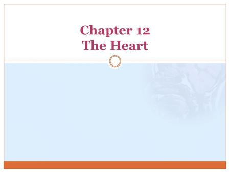 Chapter 12 The Heart. Location, Size, and Position of the Heart In mediastinum 2/3 to the left of the body midline Apex = point  Most inferior portion.