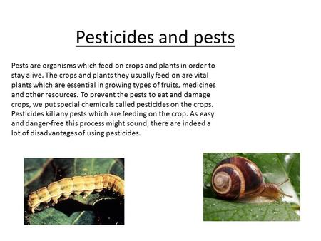 Pesticides and pests Pests are organisms which feed on crops and plants in order to stay alive. The crops and plants they usually feed on are vital plants.