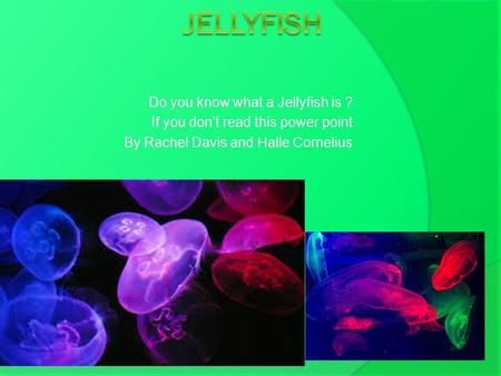 Do you know what a Jellyfish is ? If you don't read this power point By Rachel Davis and Halle Cornelius.