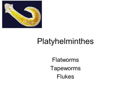 Platyhelminthes Flatworms Tapeworms Flukes. PHYLUM PLATYHELMINTHES Bilateral Triploblastic Acoelomate –Gastrovascular cavity Cephalization Ladder-like.