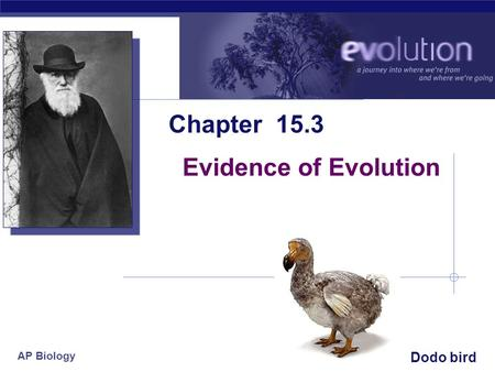 AP Biology 2006-2007 Chapter 15.3 Evidence of Evolution Dodo bird.