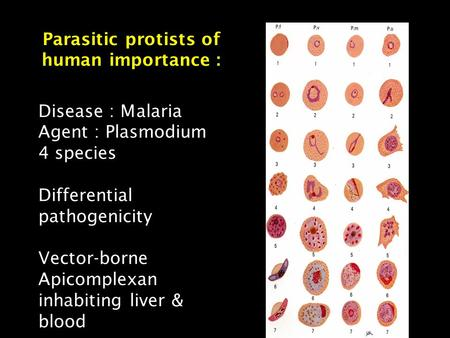 Parasitic protists of human importance : Disease : Malaria Agent : Plasmodium 4 species Differential pathogenicity Vector-borne Apicomplexan inhabiting.