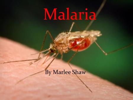 Malaria By Marlee Shaw. Vector born infectious vector born carried by mosquitoes Vector born infectious vector born carried by mosquitoes Carried by female.
