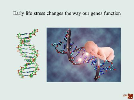 Early life stress changes the way our genes function.