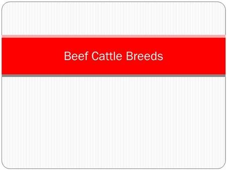 Beef Cattle Breeds. Beef cattle breeds are animals that are well-muscled, because muscle is beef. And Beef is what we eat. Beef breeds commonly found.