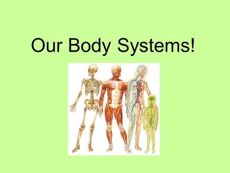 Our Body Systems!. Body Systems What are they? You have 11 body systems in your body. Each of these work together to make your body operate. When you.