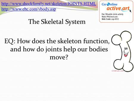 The Skeletal System EQ: How does the skeleton function, and how do joints help our bodies move?