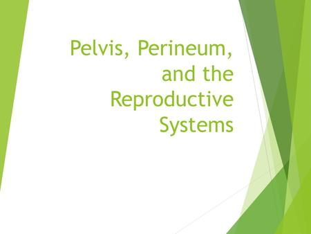 Pelvis, Perineum, and the Reproductive Systems. Objectives  Describe the contents and arrangement of structures in the pelvic cavity in both genders.