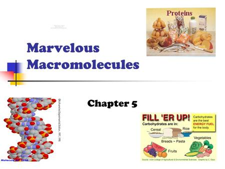 Marvelous Macromolecules Chapter 5 Macromolecules Large molecules formed by joining smaller organic molecules Four Major Classes Carbohydrates Lipids.