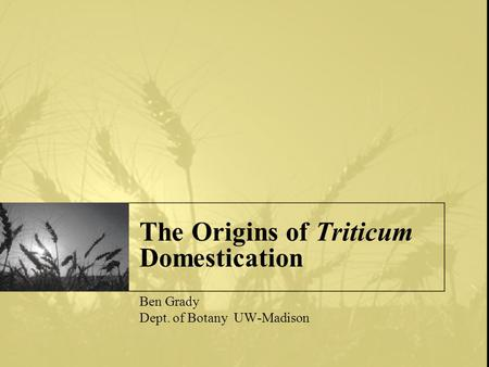 The Origins of Triticum Domestication Ben Grady Dept. of Botany UW-Madison.