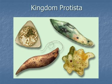 Kingdom- Protista (protists) Common Characteristics of all ...
