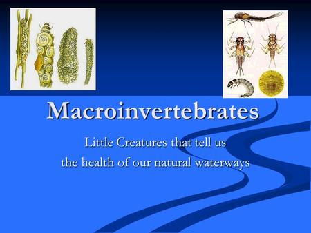 Macroinvertebrates Little Creatures that tell us the health of our natural waterways.