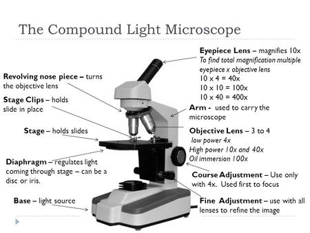 The Compound Light Microscope Eyepiece Lens – magnifies 10x To find total magnification multiple eyepiece x objective lens 10 x 4 = 40x 10 x 10 = 100x.