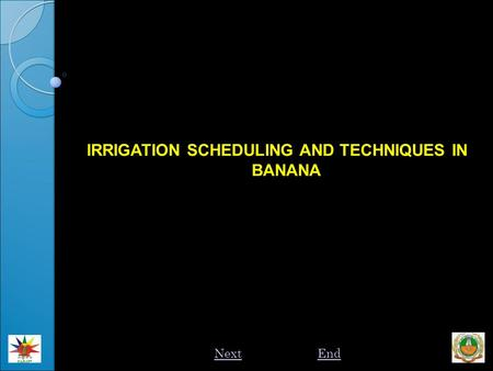 IRRIGATION SCHEDULING AND TECHNIQUES IN BANANA NextEnd.