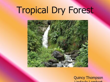 Tropical Dry Forest Quincy Thompson Lindayle Lambert.