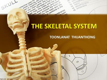 TOONLANAT THUANTHONG THE SKELETAL SYSTEM. Functions of The Skeletal system Support body weight Enable movement Protect vital organs Point of attachment.