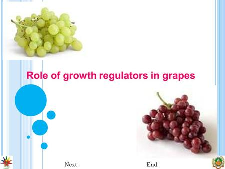 Role of growth regulators in grapes NextEnd. NextPreviousEnd Growth Regulators The use of growth regulators not only enhances the productivity of vines.