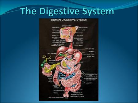 Introduction The digestive system is used for breaking down food into nutrients which then pass into the circulatory system and are taken to where they.