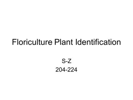 Floriculture Plant Identification S-Z 204-224. 204 Saintpaulia ionantha cv. African Violet Colors: blue to violet to red flowers in groupings of 3 Characteristics:
