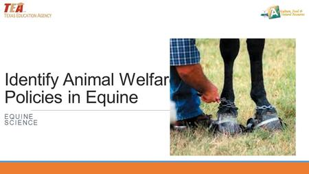 Identify Animal Welfare Policies in Equine EQUINE SCIENCE.