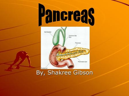 By, Shakree Gibson. Location The pancreas is located deep in the abdomen, between the stomach and the spine. It lies partially behind the stomach. The.