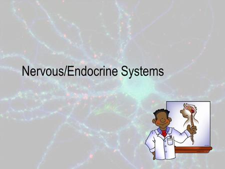 Nervous/Endocrine Systems. Function of the Nervous System Coordinates organ system activities to help maintain homeostasis. – Homeostasis is the body's.