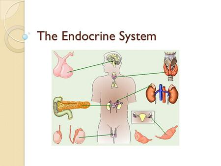 The Endocrine System. Hormones Recall that neurons have the ability to communicate However, this is merely cell-to-cell What if a signal needed to be.