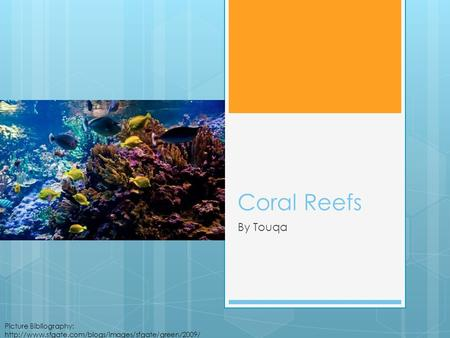 Coral Reefs By Touqa Picture Bibliography:  08/03/reef625x416600x399.jpg.