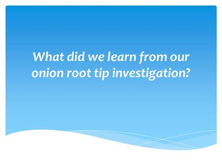 What did we learn from our onion root tip investigation?