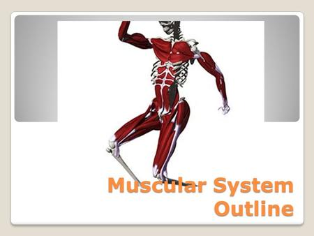 Muscular System Outline. 3 Types of Muscle Tissue 1. Skeletal – Voluntary; responsible for movement. 2. Smooth (Visceral) – Involuntary; movements of.