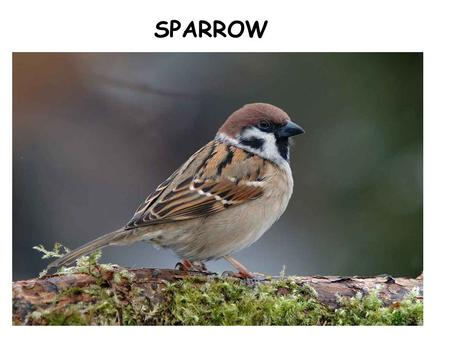 SPARROW. SNAIL HAMMER NAIL foreststreet Yes I would, if I could, I surely would.