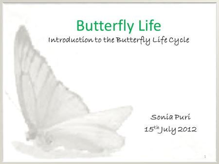 Butterfly Life Introduction to the Butterfly Life Cycle