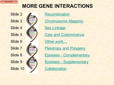 MORE GENE INTERACTIONS Slide 2RecombinationRecombination Slide 3Chromosome MappingChromosome Mapping Slide 4Sex LinkageSex Linkage Slide 5Cats and CodominanceCats.