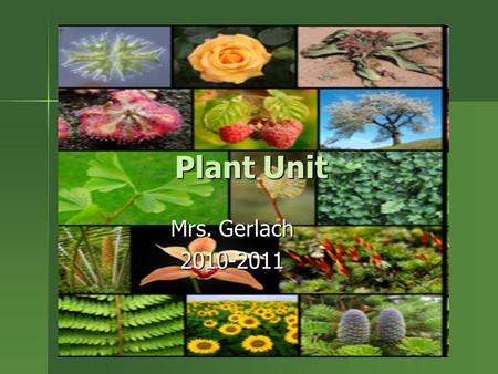 Plant Unit Mrs. Gerlach 2010-2011. Classifying Plants Non-vascular: have no vessels, no roots, no stems, or leaves. Non-vascular: have no vessels, no.