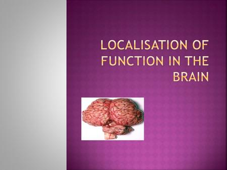  The brain exhibits localization of function. This means that different parts of the brain carry out different functions (e.g., vision, control of.