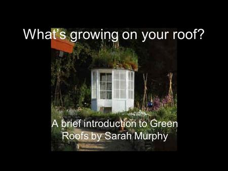 What's growing on your roof? A brief introduction to Green Roofs by Sarah Murphy.