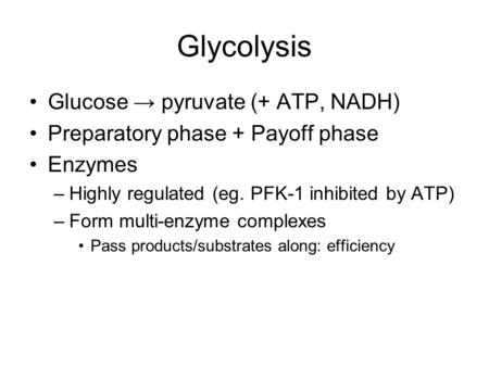 Glycolysis Glucose → pyruvate (+ ATP, NADH) Preparatory phase + Payoff phase Enzymes –Highly regulated (eg. PFK-1 inhibited by ATP) –Form multi-enzyme.