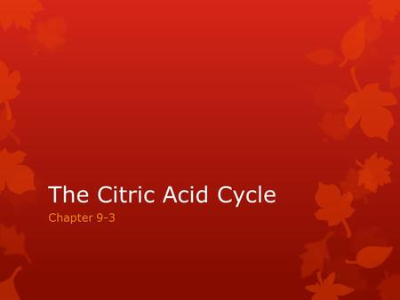 The Citric Acid Cycle Chapter 9-3. The Second Phase The Citric Acid cycle is just the second step towards harvesting energy as glycolysis has already.