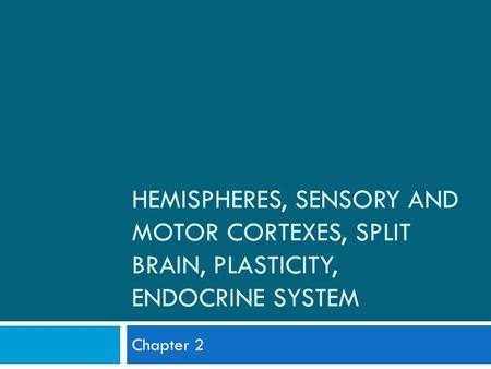HEMISPHERES, SENSORY AND MOTOR CORTEXES, SPLIT BRAIN, PLASTICITY, ENDOCRINE SYSTEM Chapter 2.