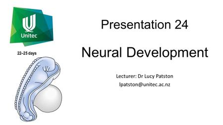 Presentation 24 Neural Development Lecturer: Dr Lucy Patston