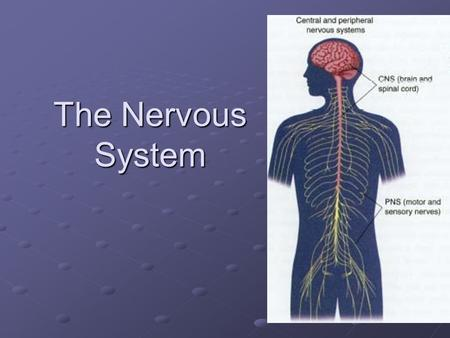 The Nervous System. Functions of the Nervous System the center of all thought, learning and memory.
