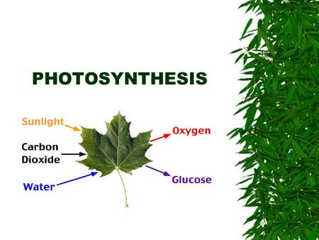 PHOTOSYNTHESIS. Key Idea #12  Photosynthesis transforms light energy to chemical energy which is used to form the key chemical building blocks of living.