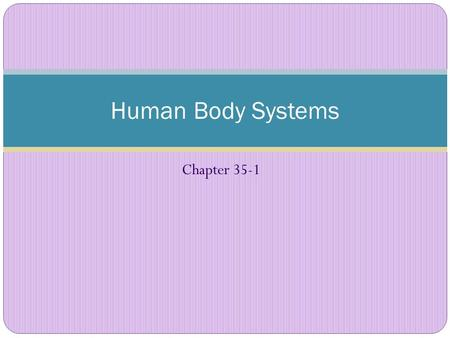 Chapter 35-1 Human Body Systems. Organization of the body 1. CELLS: Simplest, lowest level of organization Each cell type has a different function and.