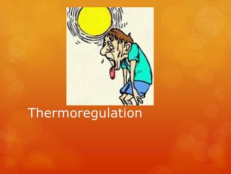 Thermoregulation. Homeostasis – Is the stable, constant temperature for the human body to most effectively function. This is around 37 degrees Celsius.