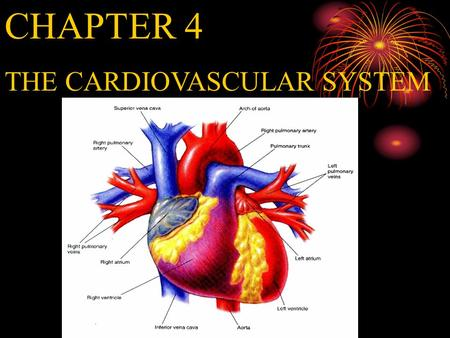 CHAPTER 4 THE CARDIOVASCULAR SYSTEM Weight of the heart 300g Work: 75/min, 10000 beats /day 35 million beats /year, 2.5 billion beats/life 70ml/beat,