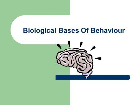 Biological Bases Of Behaviour. Central Nervous System Consists of the brain and the spinal cord The spinal cord connects the brain to the peripheral nervous.