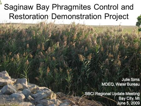 Saginaw Bay Phragmites Control and Restoration Demonstration Project Julie Sims MDEQ, Water Bureau SBCI Regional Update Meeting Bay City, MI June 5, 2009.
