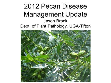 2012 Pecan Disease Management Update Jason Brock Dept